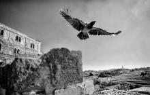 3.-Birds-eye-view-of-East-Jerusalem-2